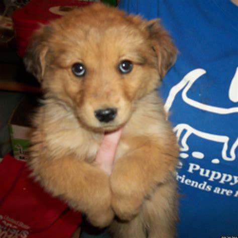 puppy adoption denver lifeline puppy rescue s adoptable pups this week photos huffpost