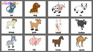 animal pictures for toddlers pet animals with colorful pictures for nursery