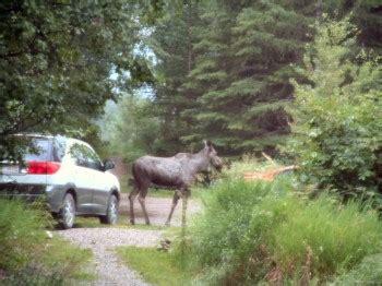 Blockhütte Urlaub by The Deer Crossing Windermere Creek Bed And Breakfast Cabins