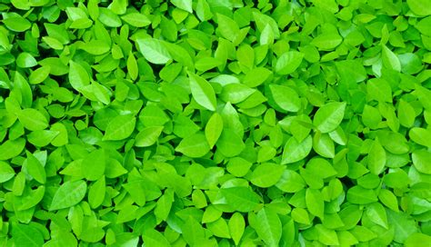 bright green plants leaves wallpapers hd