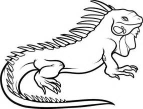 iguana coloring page large dominant iguana coloring page