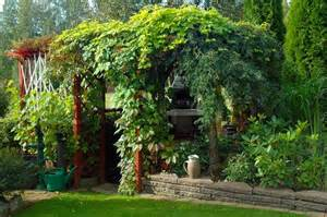 Best Climbing Plants For Pergola by Lush Climbing Plants In A Pergola In A Beautiful Garden