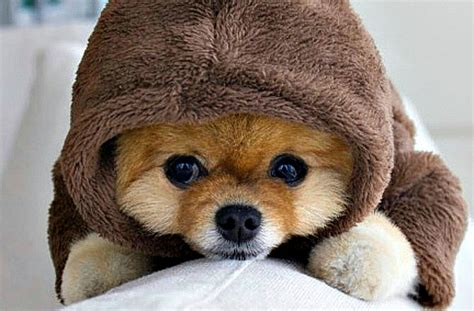 what of is jiffpom jiffpom s guide to beating the winter blues pawculture
