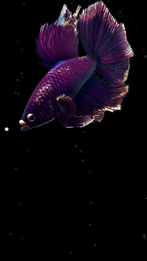 betta fish  wallpaper   android apk