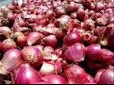Jual Bibit Bawang Merah Brebes jual bawang merah brebes toko pesan harga beli