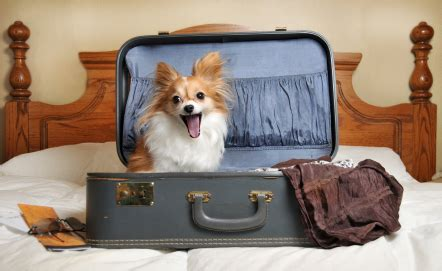 hotel chains that allow dogs top friendly hotel chains