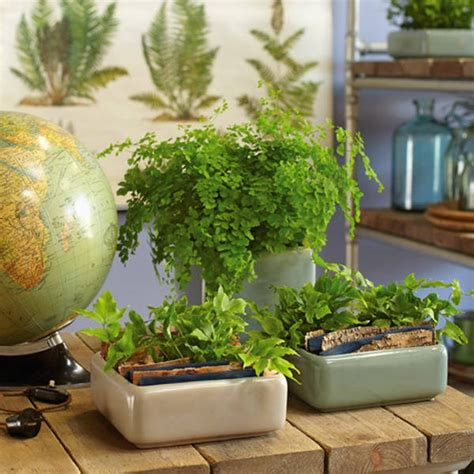 Zimmerpflanzen Deko Ideen zimmerpflanzen deko ideen