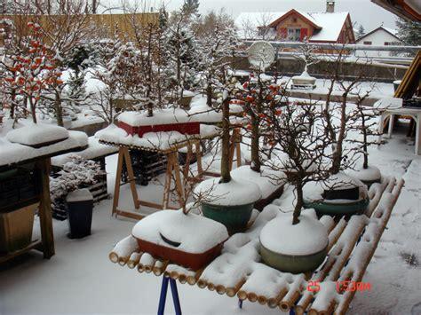 garten bonsai winterfest machen winterquartier bonsaipflege ch