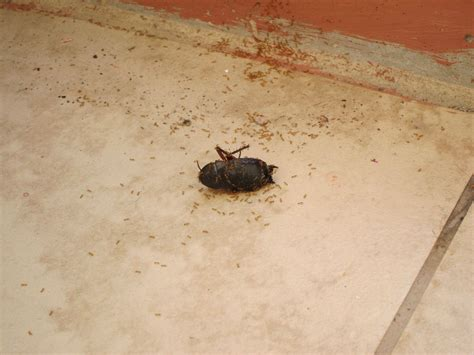 small black bugs in basement it s a bug eat bug world out there bugs infest clean