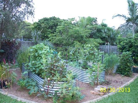 Vegetable Gardening Forum My Sub Tropical Garden In Vegetable Garden Forum
