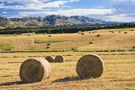 farmland paddock hay bales picture new zealand photo