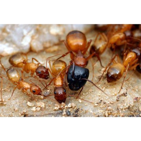 termite deemak control  fully guaranteed
