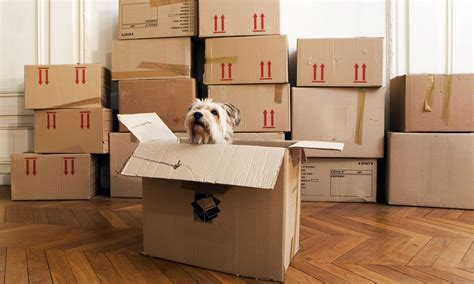 mover supply house everything you need to know about packing supplies when moving house