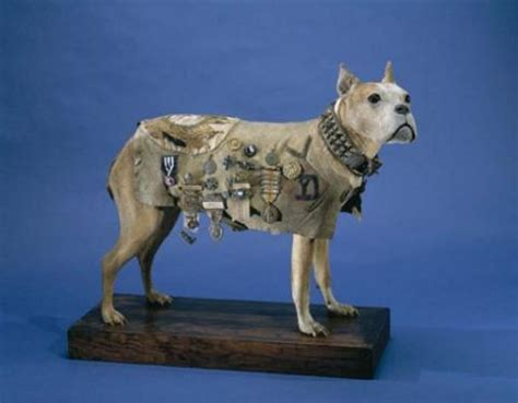 Sergeant Stubby German Answer Me This Smithsonian Institution Archives