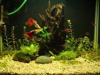 Lu Aquarium Ikan Hias memelihara ikan hias air tawar di aquarium a shout from