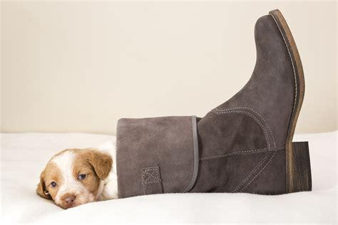 puppy boot c puppy boots wallpaper 1920x1280 166408 wallpaperup