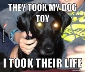 New Dog Meme - doge meme 9gag new killer dog meme animals acting