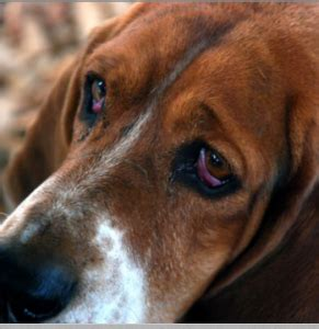 can dogs see in the how well can dogs see in the discoveries