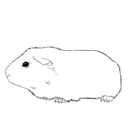 coloring page of a guinea pig ginnie pig coloring pages coloring home