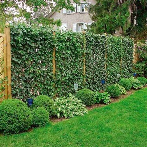20 green fence designs plants to beautify garden design - Climbing Plants For Privacy