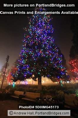 esther short park christmas tree vancouver wa photo