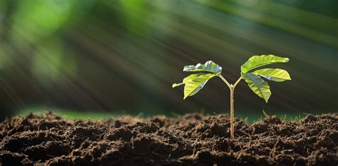 backyard soil fertile ground what you need to know about soil to keep your garden healthy