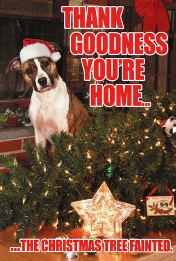 tree fainted dog box   funny christmas cards  nobleworks