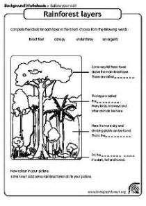 layers of the rainforest worksheet worksheet amp workbook site