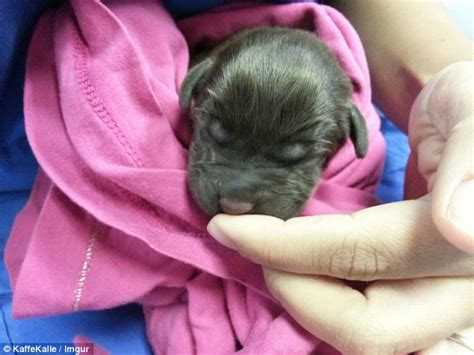 puppy with cleft palate vet who saved with a cleft palate before he was put documents his recovery