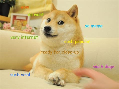 Original Doge Meme - gone viral the memes and videos that defined 2013 pcworld