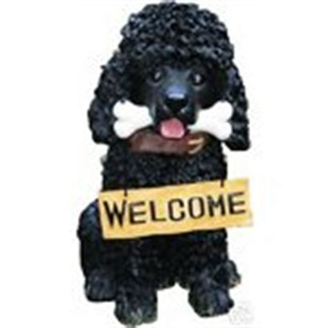 black poodle lifespan size black poodle welcome figurine statue gift