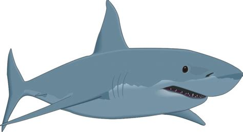 Great White Shark Clip by Great White Shark Pictures Clipart Best