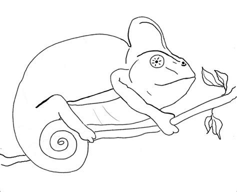 chameleon lizard coloring pages chameleon coloring pages to printable