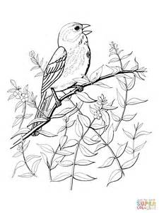 House Sparrow Page Coloring Pages Sparrow Coloring Pages