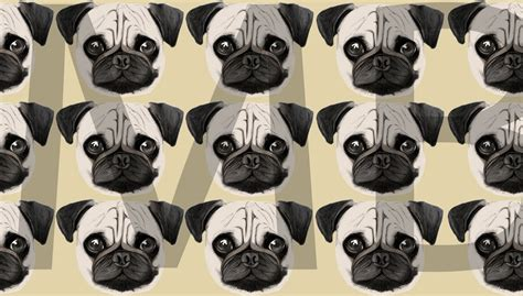 pug l pug background pictures to pin on pinsdaddy