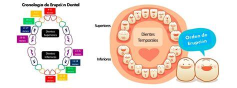 imagenes dientes temporales dientes temporales o de leche
