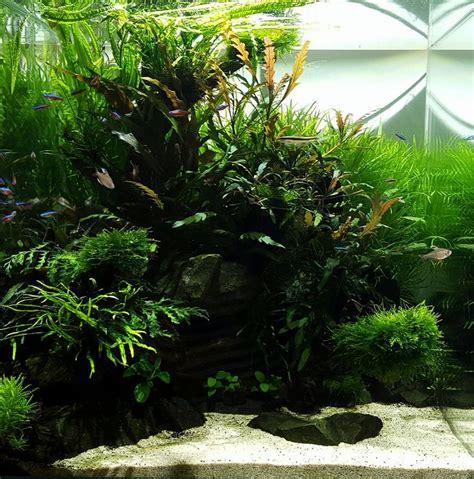 498 best aquascape images on aquarium ideas
