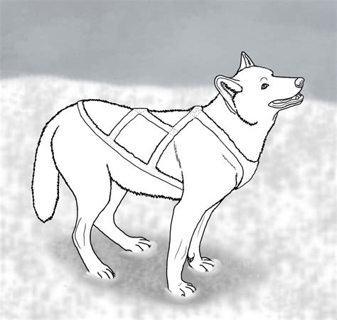 how to sled dogs sled drawing www imgkid the image kid has it
