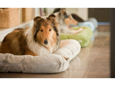 west paw dog beds best dog beds from west paw the grommet
