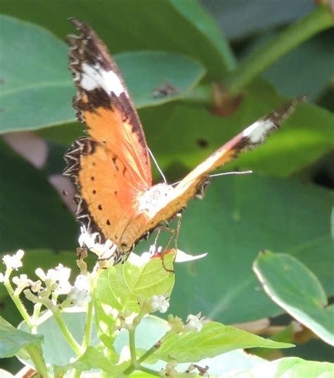 Gainesville Butterfly Garden butterfly garden gainesville fl butterfly