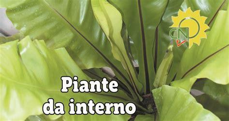 piante da interno alte piante da interno casanatura vivaio