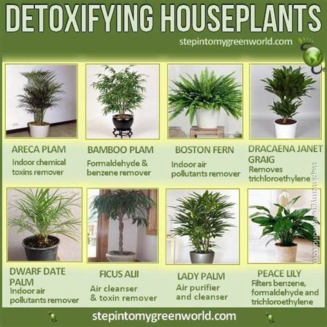 Plants That Detox The Air by Detoxifying House Plants Flowers Plants