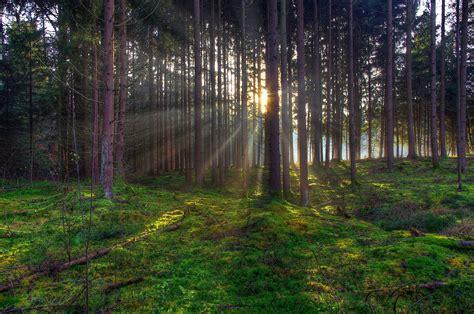 imagenes de bosques otoñales orman yaşıyorum 199 evrimi 231 i geniş arkaplanlar g 252 zel yaban