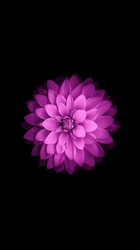 iphone 6 flower wallpaper iphone 5s wallpaper