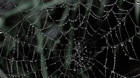 hd web spiderweb wallpapers wallpaper cave