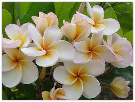 foto fiori piu belli mondo i 5 fiori tra i pi 249 belli mondo