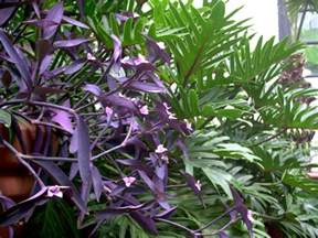 plant with purple flowers purple plant by eriksdarkangel on deviantart