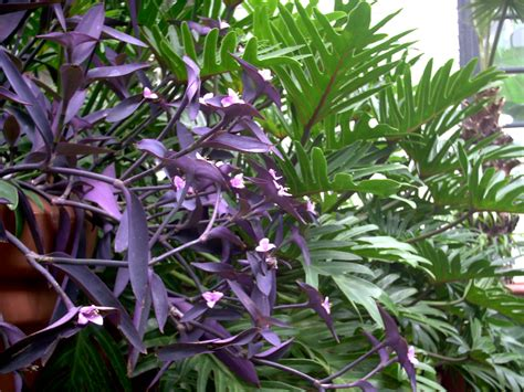 plant with purple flowers purple plant by eriksdarkangel on deviantart