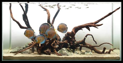 driftwood aquascape design http fish etc com wp content uploads 2012 04 hardscaping