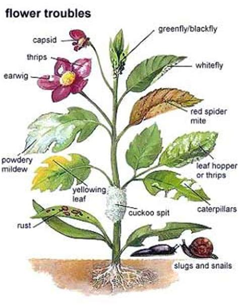 what garden pest or disease is that what is wrong with your garden plant common garden pests